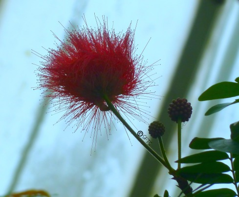 Spring-Flowers-Phipps
