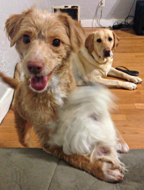 Puppy-Play-Date-Vivi